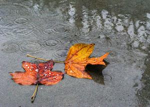 La Terra. Lacrime d'autunno.