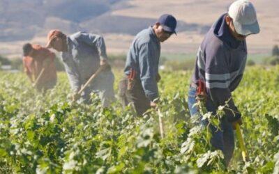 CONFEURO: GIOVANI E BRACCIANTI, POSITIVE LE NUOVE MISURE PER RIPARTENZA AGRICOLTURA