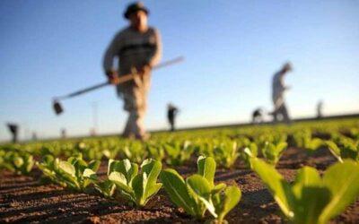 CONFEURO: CALO REDDITI AGRICOLI, I COLTIVATORI RESTANO L'ANELLO DEBOLE DELLA FILIERA