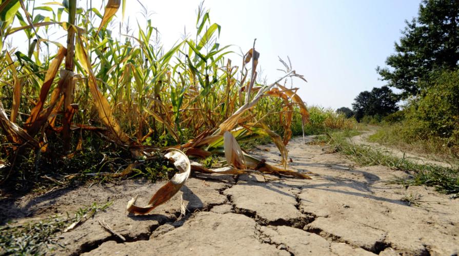 CONFEURO: CLIMA E AGRICOLTURA, L'EUROPA RICONOSCE IL SUO FALLIMENTO. NUOVA PAC OCCASIONE UNICA PER UN RINASCIMENTO AGRICOLO