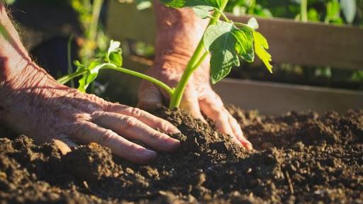 CONFEURO: AGRICOLTURA BIOLOGICA, UN VALORE AGGIUNTO ANCHE PER L'ECONOMIA. VELOCIZZARE APPROVAZIONE LEGGE