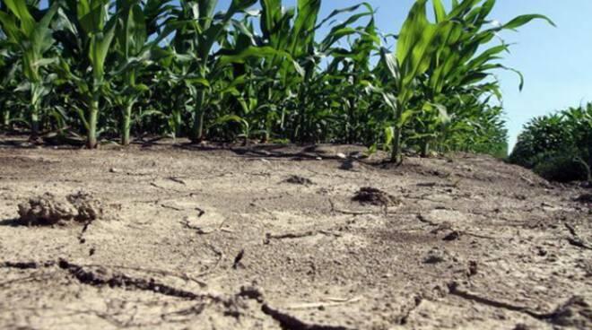 CONFEURO: CLIMA, AGRICOLTURA SEMPRE PIÙ IN SOFFERENZA. SERVE UN CAMBIO DI PASSO