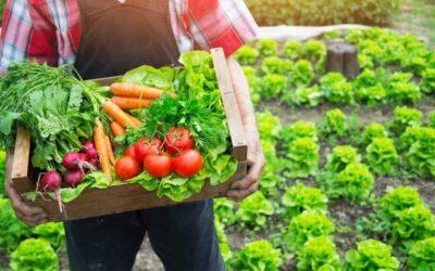 CONFEURO: NUTRIRE L'EUROPA, CON L'AGRICOLTURA BIOLOGICA È POSSIBILE MA SERVE UNA TRASFORMAZIONE RADICALE