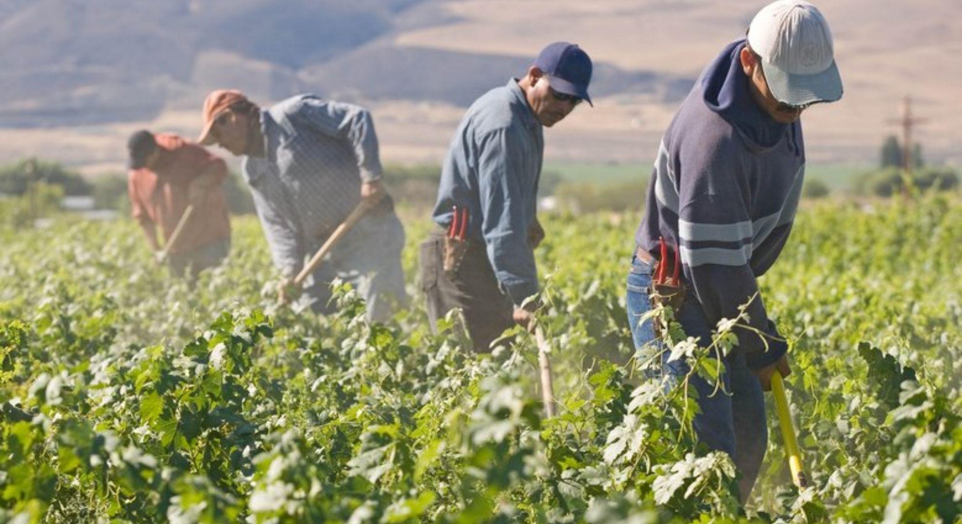 coltivatori